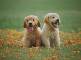 A leggyakoribb kutyabetegségek kölyökkorban